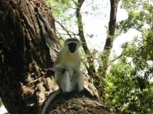 damn monkey