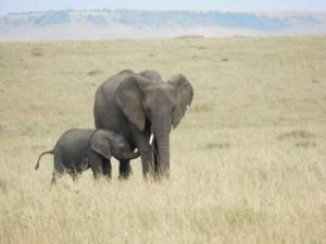 elephant and cub
